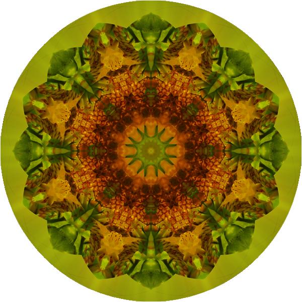 helena-weingartner-curando-heliand